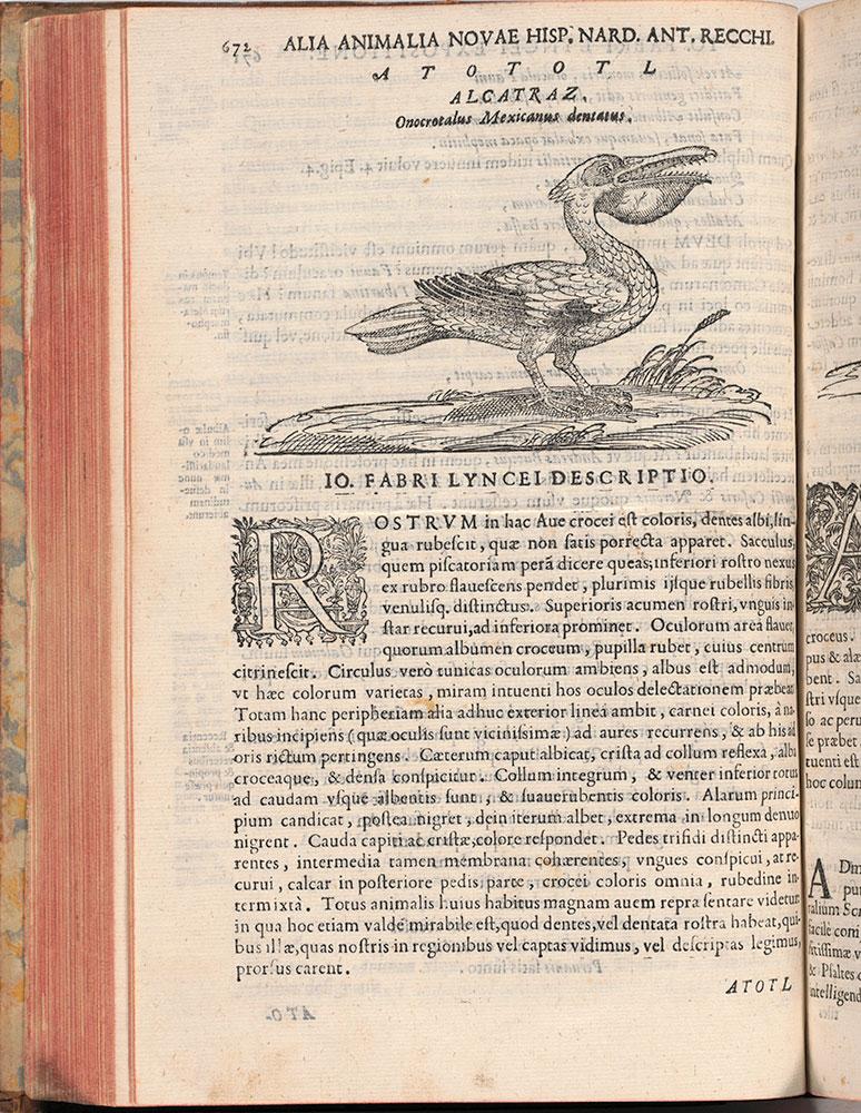 Rerum medicarum Novae Hispaniae thesaurus seu plantarum animalium mineralium Mexicanorum historia
