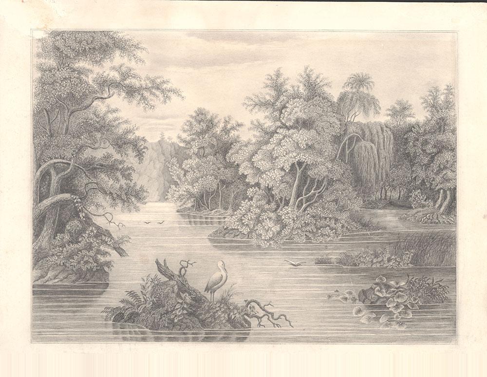 [Forest Scene on the Lehigh, Pennsylvania]