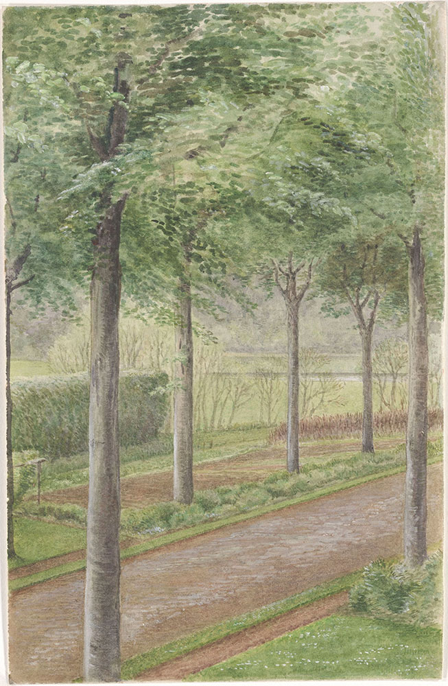 Watercolor by Beatrix Potter