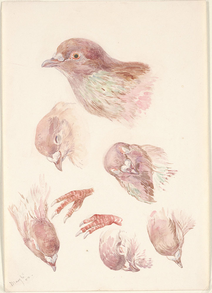 Paintings of a Bird