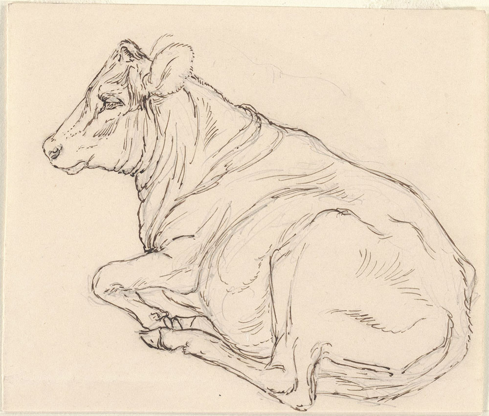 Pen and ink and pencil sketch of a cow reclining