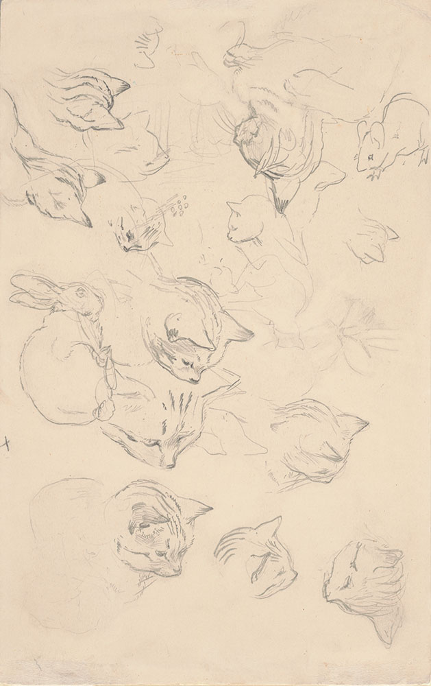 Studies of cats, rabbits, and a mouse
