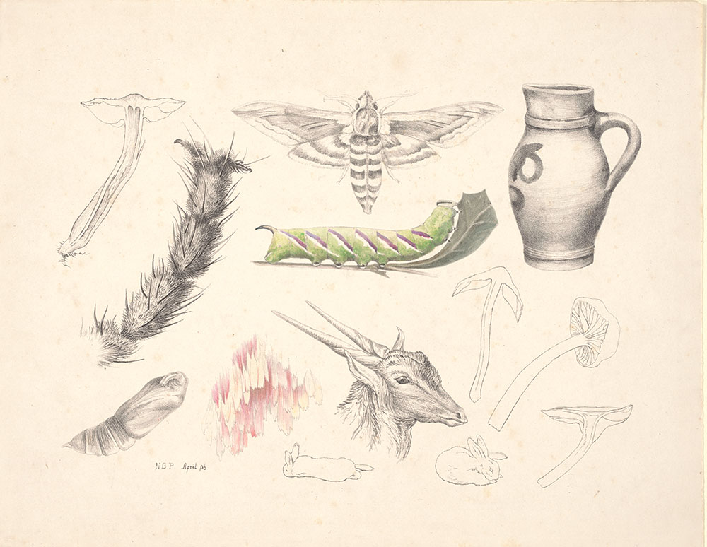 Hand-colored lithograph of fungi, magnified leg of insect, moth, caterpillar, jug, chrysalis, magnified wing scales, rabbits, and antelope's head