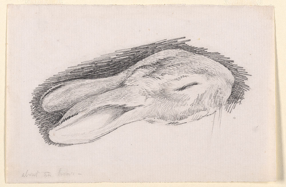 Pencil sketch of the head of a sleeping rabbit