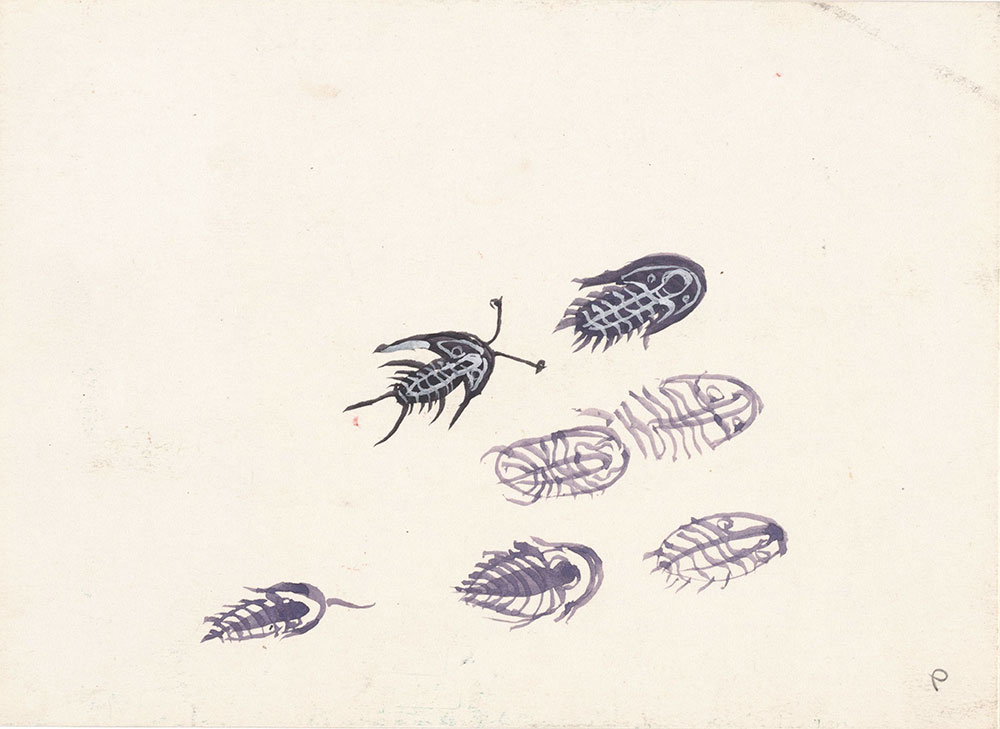 Preliminary art of trilobites, for Life Story
