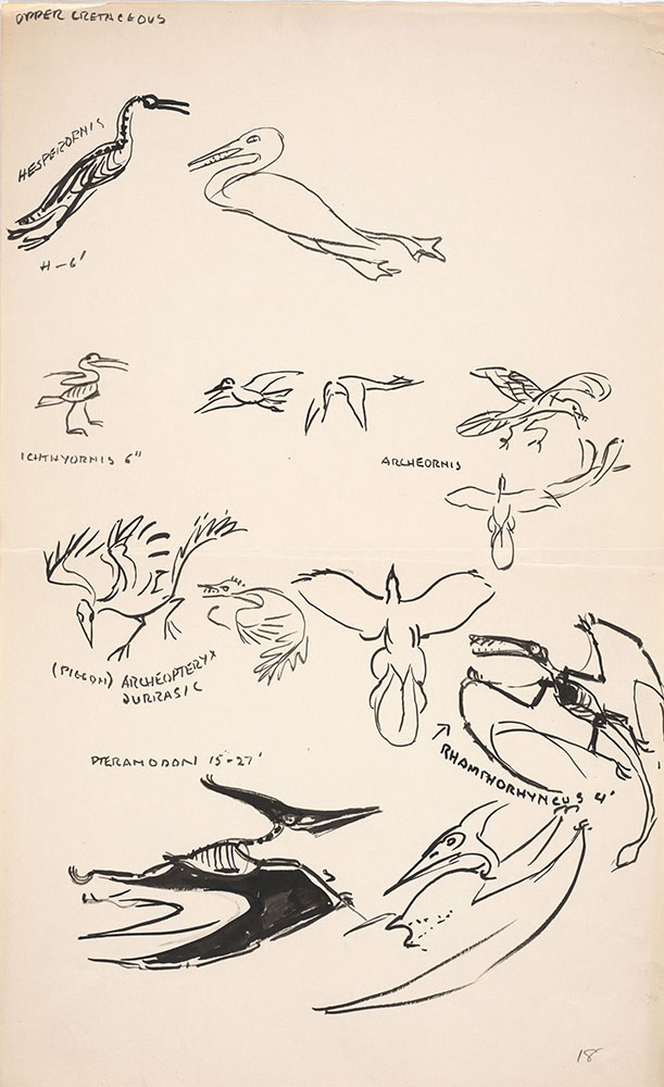 Preliminary art of flying creatures, for Life Story