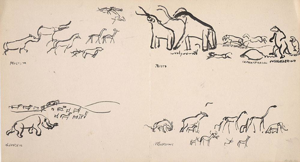 Preliminary art of animal groupings, for Life Story