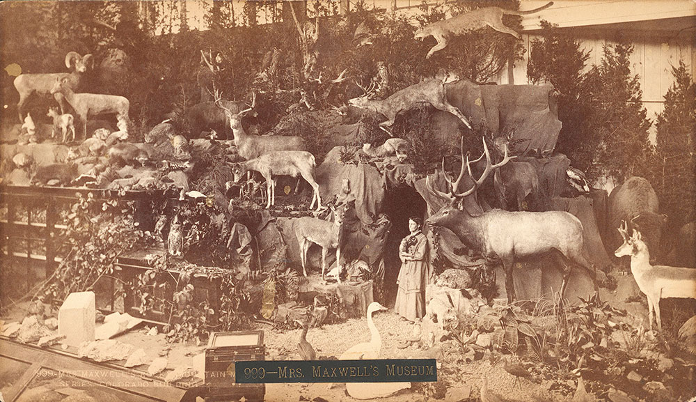 Mrs. Maxwell's Rocky Mountain Museum series