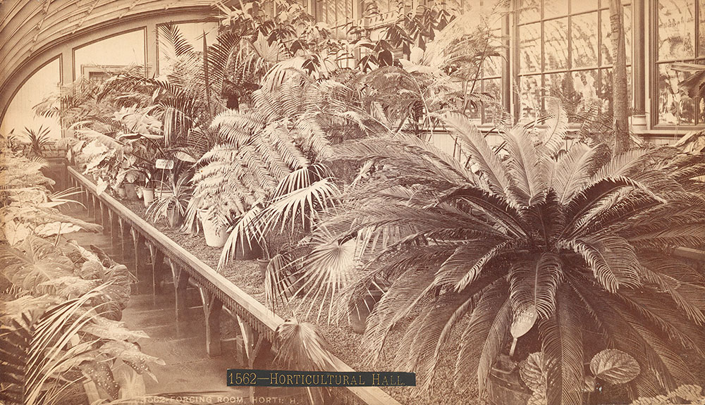 Forcing-room, Horticultural Hall -- for
