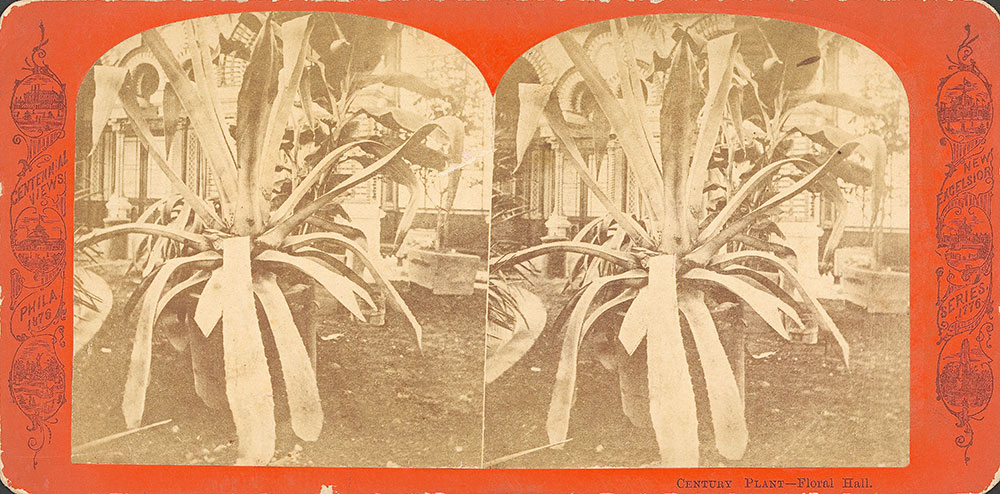 Century Plant--Floral Hall