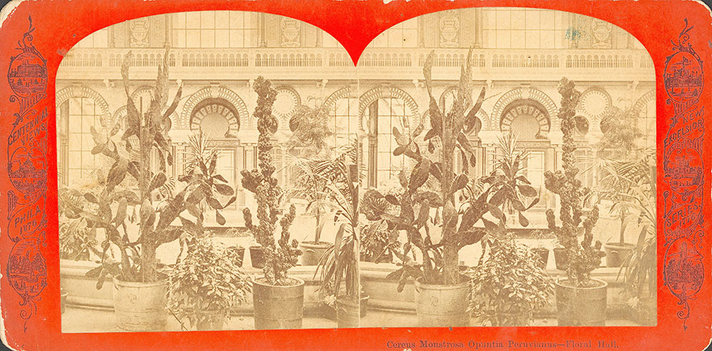 Cereus Monstrosa Oputia Peruvianus--Floral Hall
