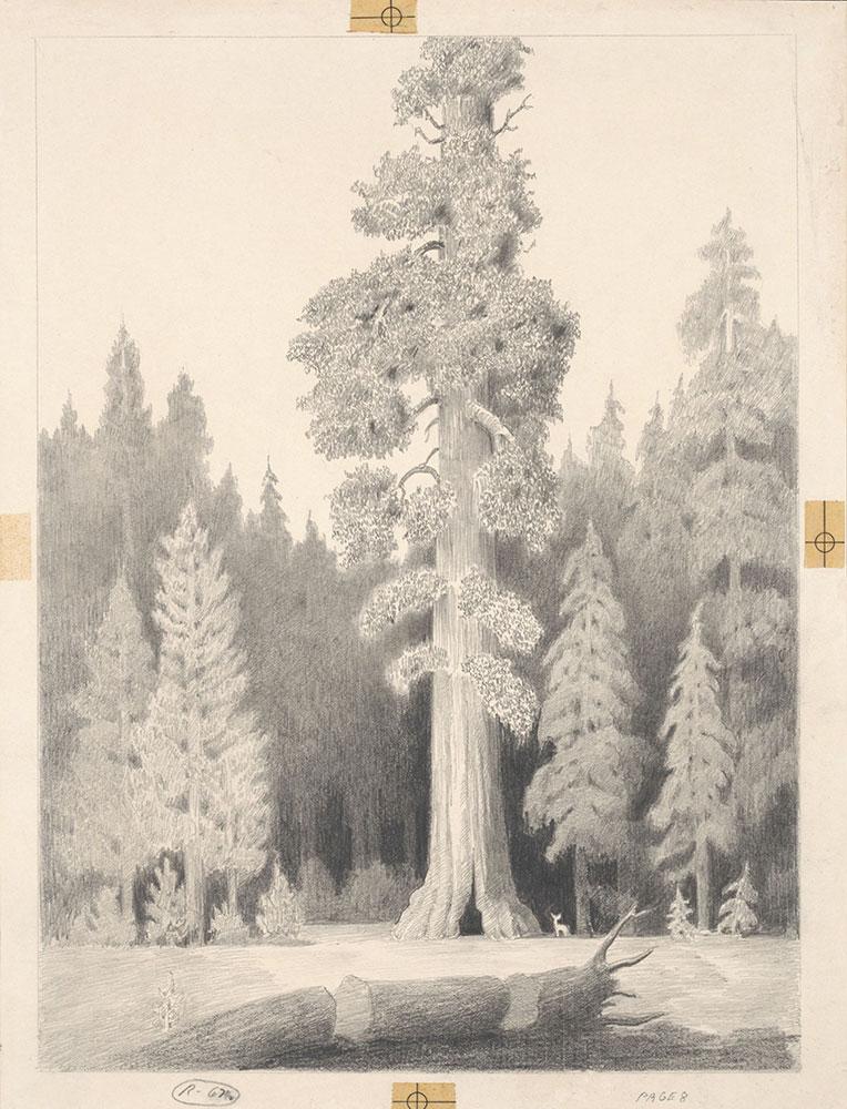Buff - Big Tree - Page 8