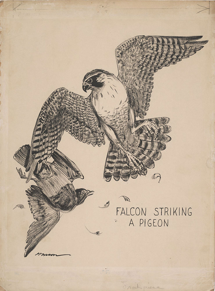 Mason - Animal Weapons - Frontispiece