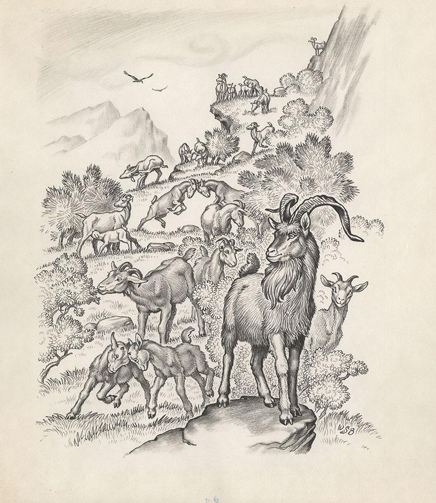 Bronson - Goats - Page 6
