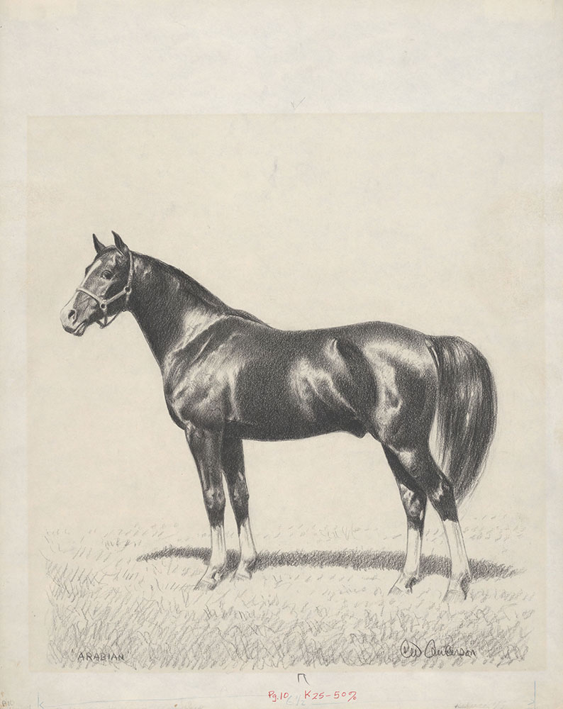 Anderson - Complete Book of Horses and Horsemanship - Arabian