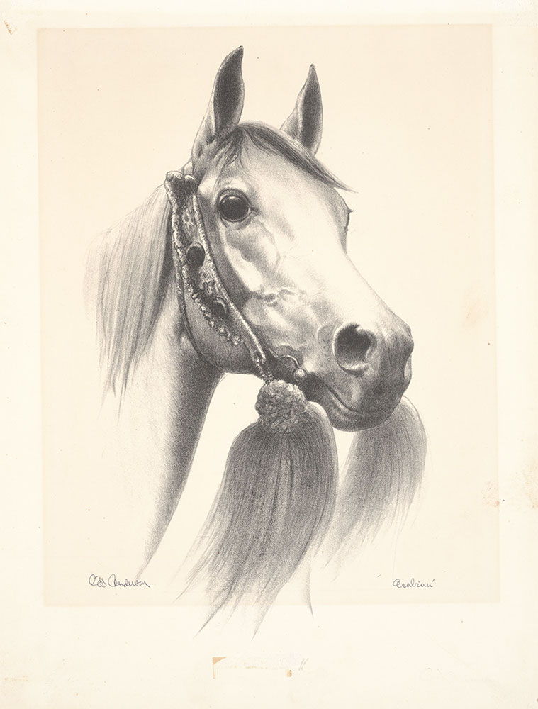 Anderson - Complete Book of Horses and Horsemanship