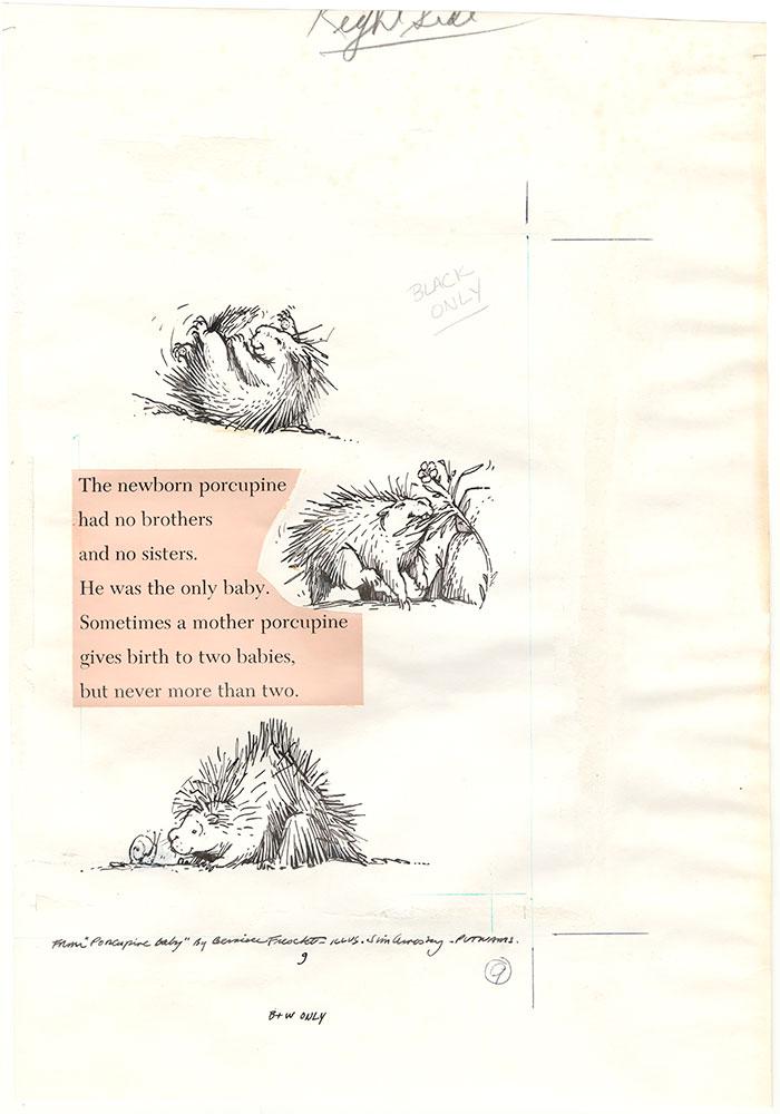 Arnosky - Porcupine Baby - Page 9