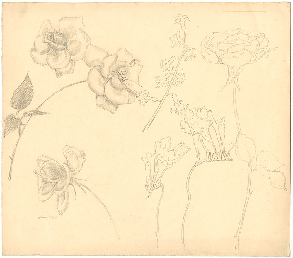 MacKinstry - Ophelia Roses