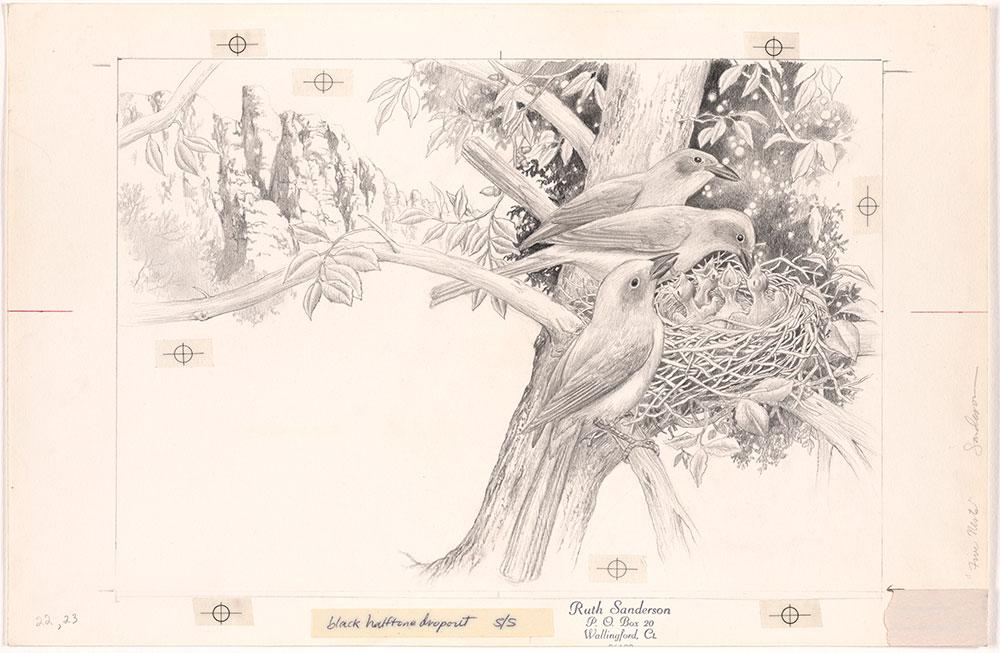 Sanderson - Five Nests - Pages 22 - 23