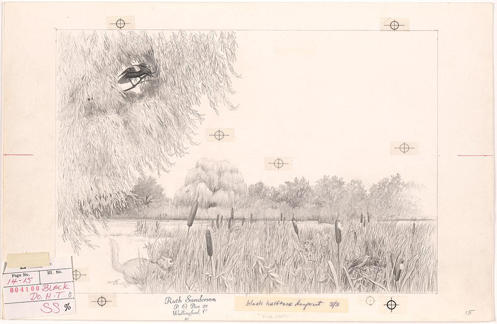 Sanderson - Five Nests - Pages 14 - 15
