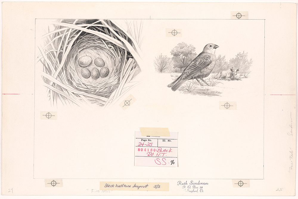 Sanderson - Five Nests - Pages 24 - 25