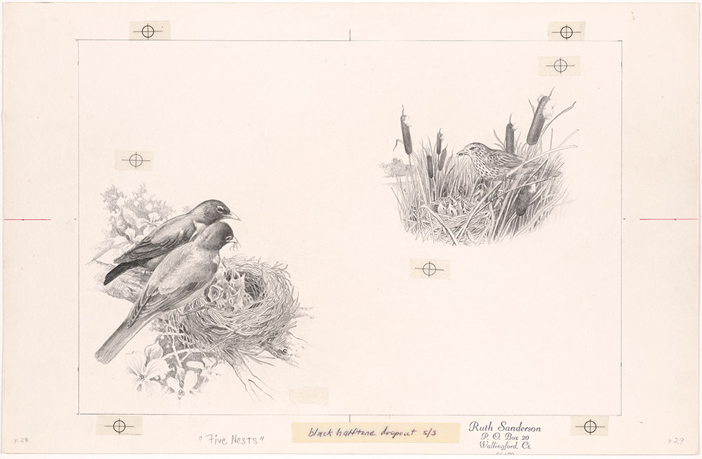 Sanderson - Five Nests - Pages 28 - 29