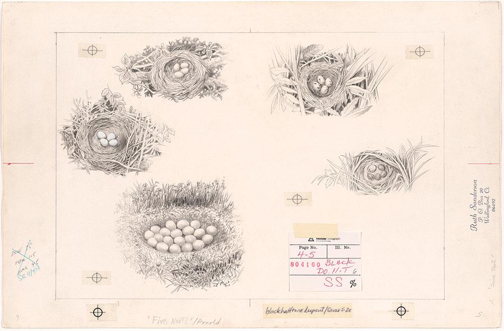 Sanderson - Five Nests - Pages 4 - 5