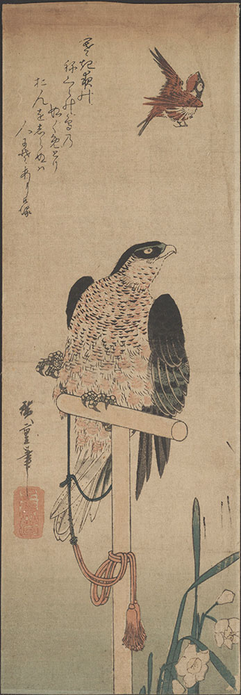 Falcon on Perch, Sparrow, and Narcissus