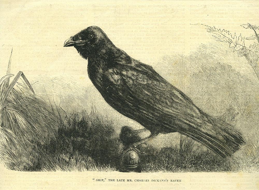 Grip - Dickens' Raven