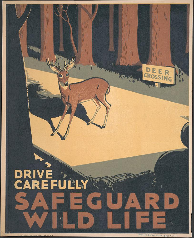 Drive Carefully Safeguard Wild Life