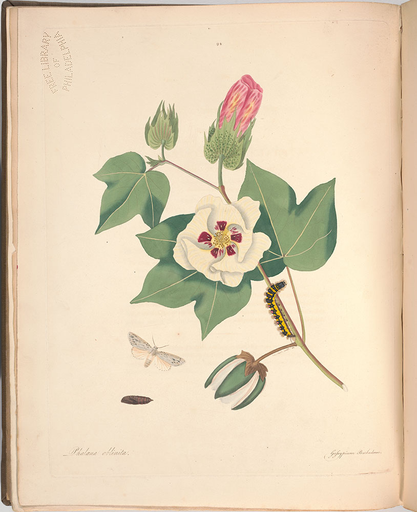 The natural history of the rarer lepidopterous insects of Georgia : including their systematic characters, the particulars of their several metamorphoses, and the plants on which they feed. Collected from the observation of Mr. John Abbot...