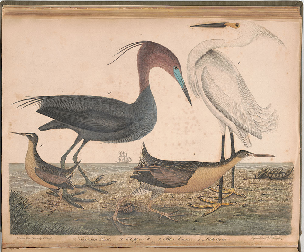 American ornithology: or The natural history of the birds of the United States