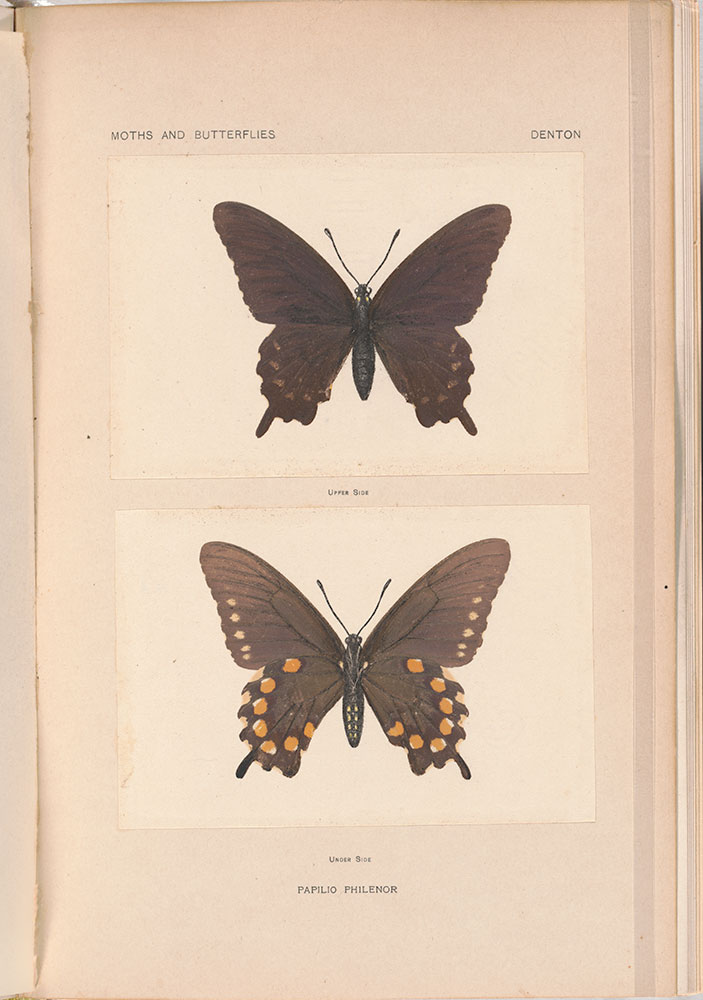 As nature shows them; moths and butterflies of the United States, east of the Rocky mountains. With over 400 photographic illustrations in the text and many transfers of species from life