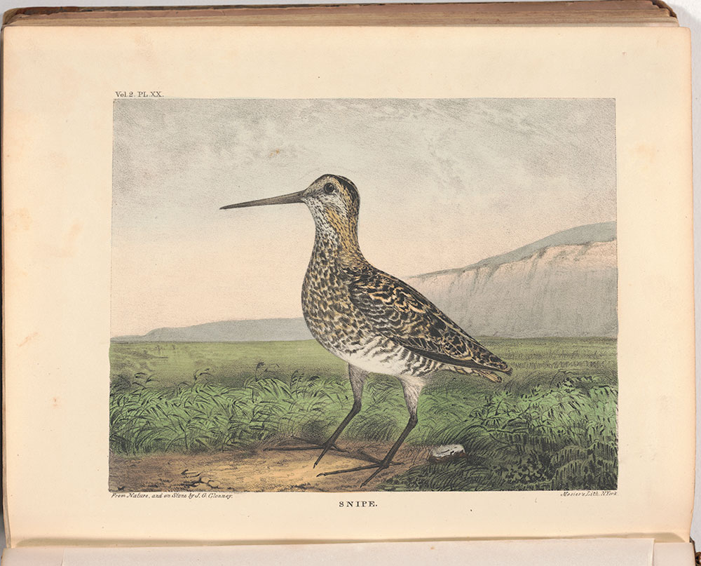 The Cabinet of natural history and American rural sports : with illustrations