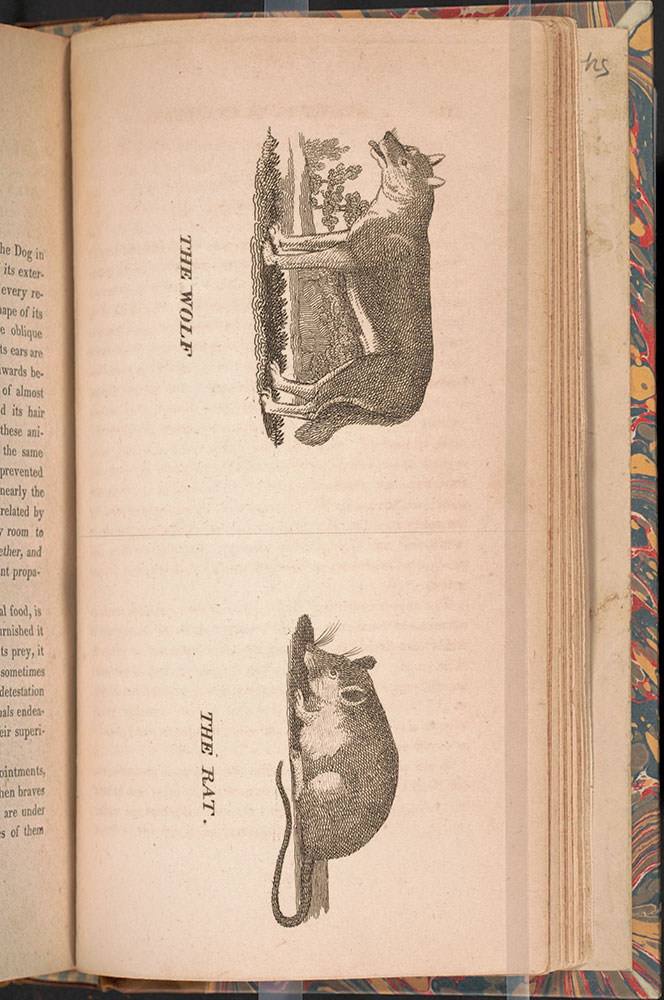 A general history of birds and quadrupeds : with 128 engravings