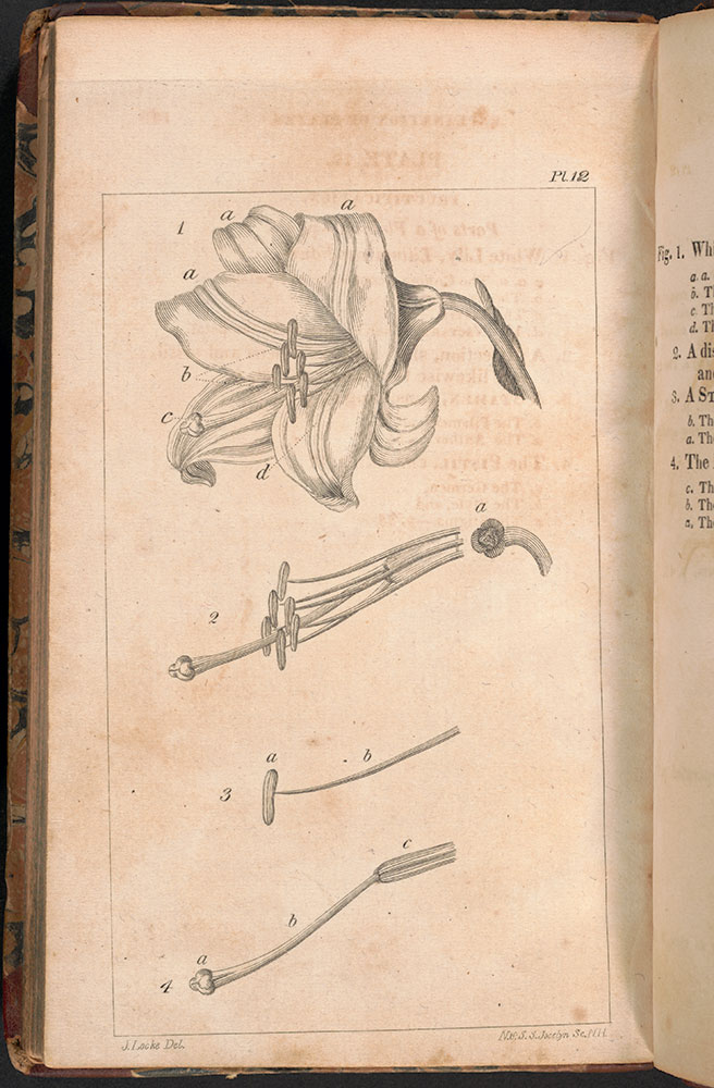 Outlines of botany : taken chiefly from Smith's Introduction; containing an explanation of botanical terms and an illustration of the system of Linnæus : also some account of natural orders, and the anatomy and physiology of vegetables