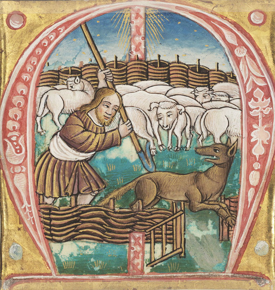 Historiated initial M depicting the parable of the Good Shepherd
