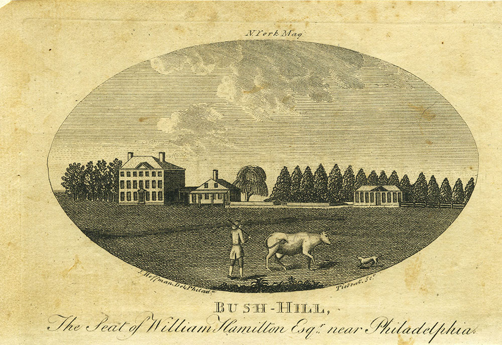 Bush-Hill