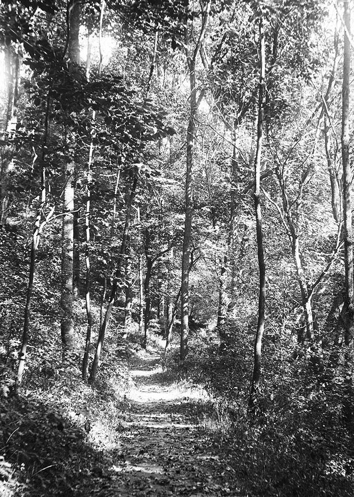 Bridal Path near Kitchen's Lane