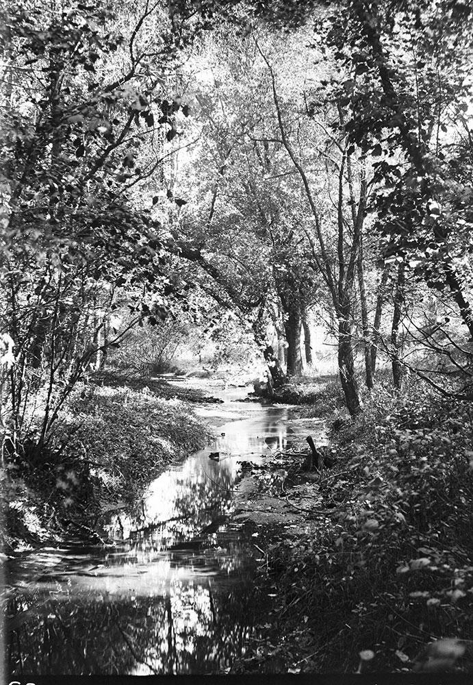 On Cresheim Creek near Devil's Pool