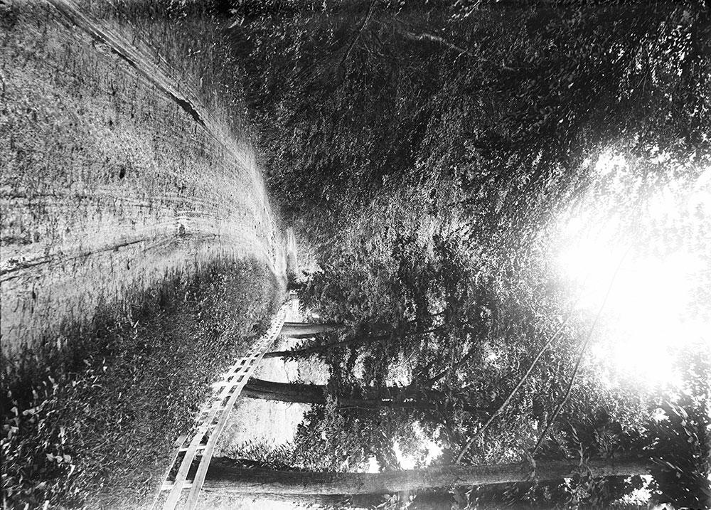 A Shady Lane