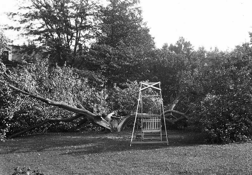 The Ferns, big apple tree blown over
