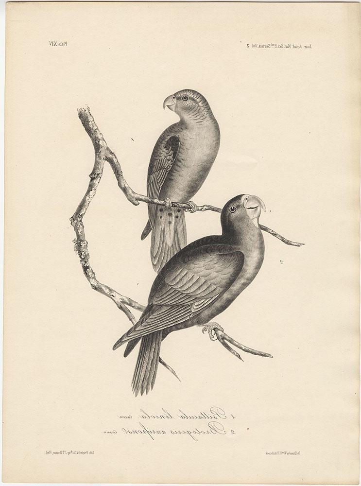 1. Psittacula lineola and 2. Brotogeris aurifrons