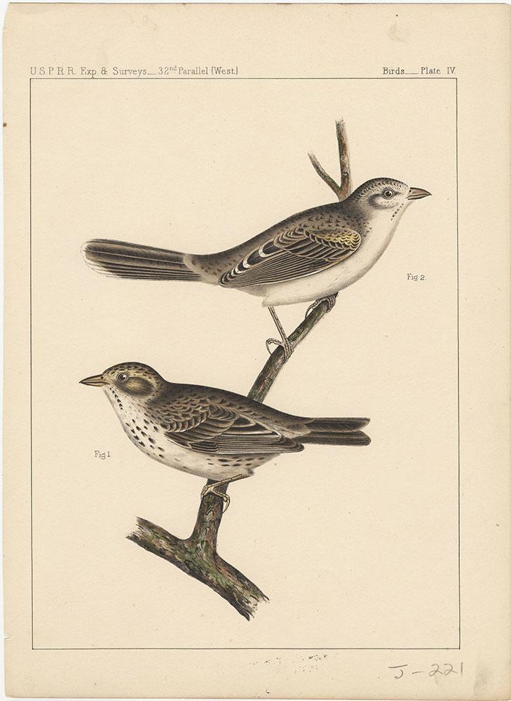 Birds, Plate IV
