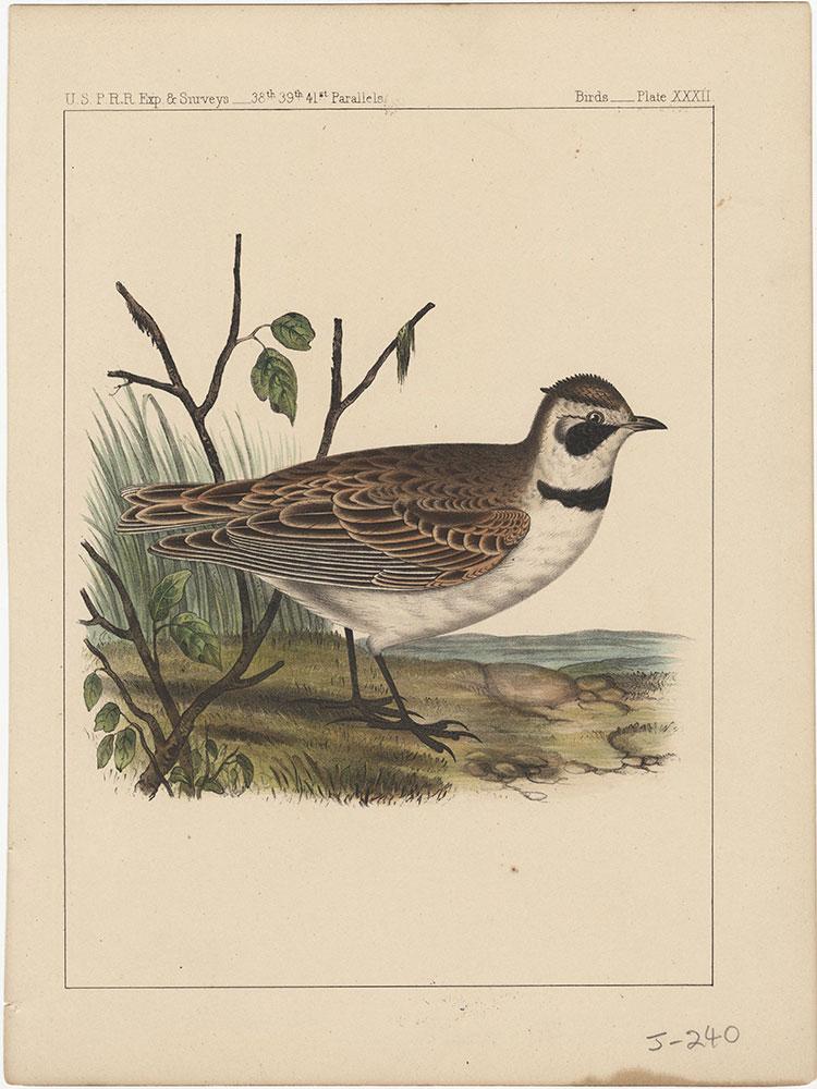 Birds, Plate XXXII