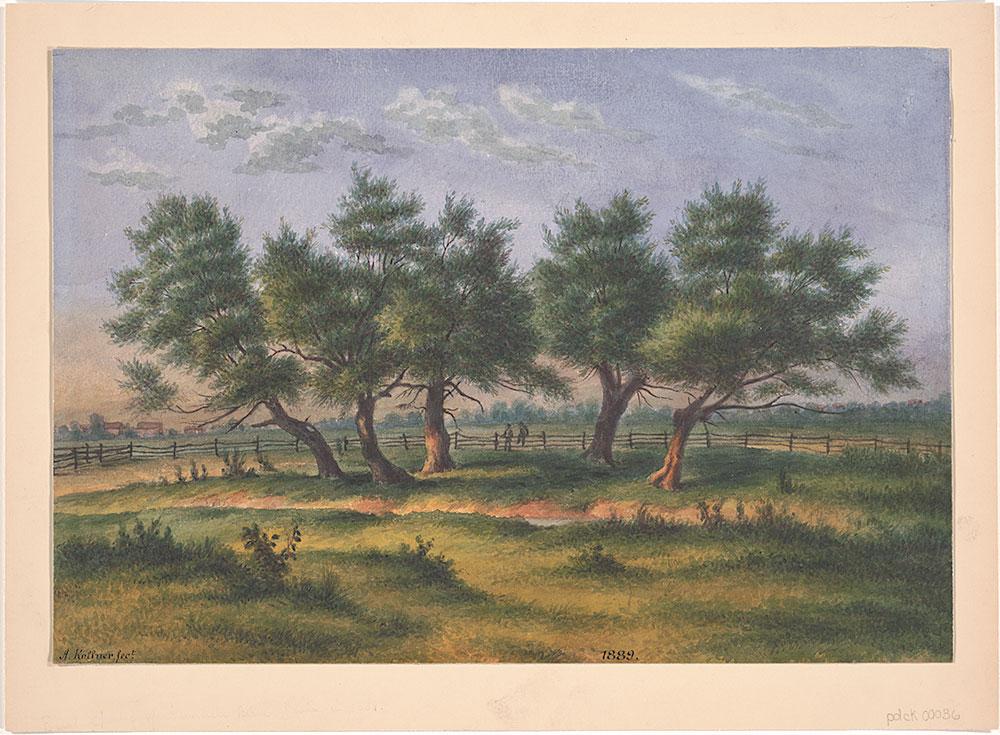 {East Spring of Gunner's Run Phila in 1889 from Nature by A. Kollner}