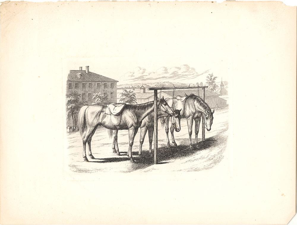 {Three horses tied up to a post, Washington, D.C.}