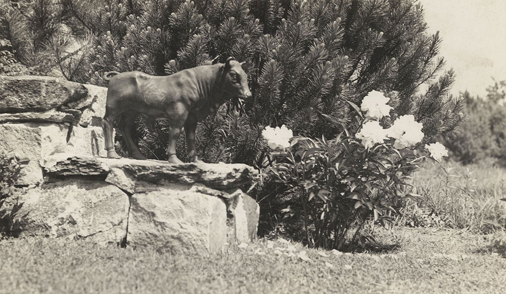 Photograph of a Ferdinand the Bull statue in Robert and Marie Lawson's garden